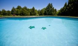 Gunite Pool With Mosiac Tile